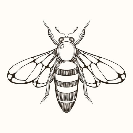 abeja: Grabado a mano esbozo de abeja. ilustración vectorial para tatuaje y decorativo broche hecho a mano.