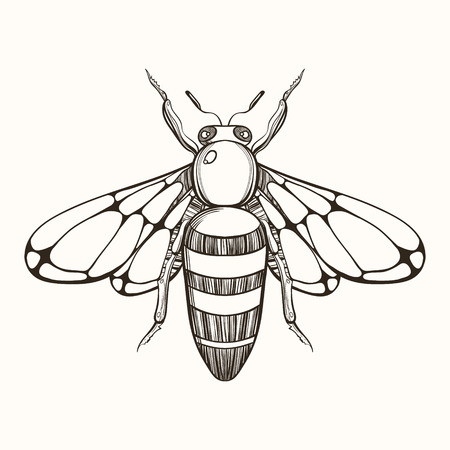 honeybee: Hand drawn engraving Sketch of  Bee. Vector illustration for tattoo and handmade decorative brooch.