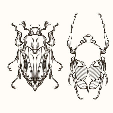 Hand drawn engraving Sketch of Scarab Beetle and May bug. Design for tattoo and handmade decorative brooch. Illustration