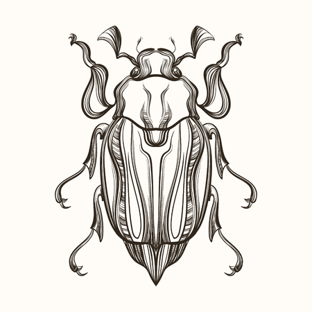 may: Hand drawn engraving Sketch of  Beetle, May bug. Vector illustration for tattoo and handmade decorative brooch.
