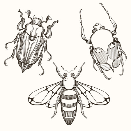 queen bee: Hand drawn engraving Sketch of Scarab Beetle, May bug and Bee. Design for tattoo and handmade decorative brooch. Illustration