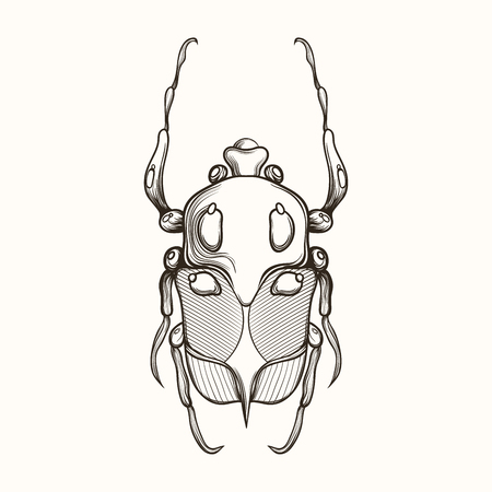 brooch: Hand drawn engraving Sketch of Scarab Beetle, May bug or European diving beetle. Vector illustration for tattoo and handmade decorative brooch. Can be used for for postcard, t-shirt, fabric bag or poster. Insect collection.