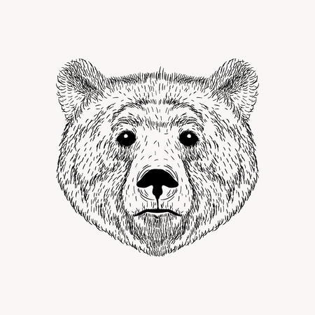 Sketch realistic face Bear. Hand drawn vector  illustration in Doodle style. Engraving sketch for tattoos.