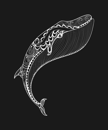 Vector zentangle de impresión ballena blanca para colorear página del adulto. Dibujado a mano ilustración artísticamente étnica con dibujos ornamentales. colección del animal de mar. Bosquejo aislado para el diseño del tatuaje, pósters, camiseta. Ilustración de vector