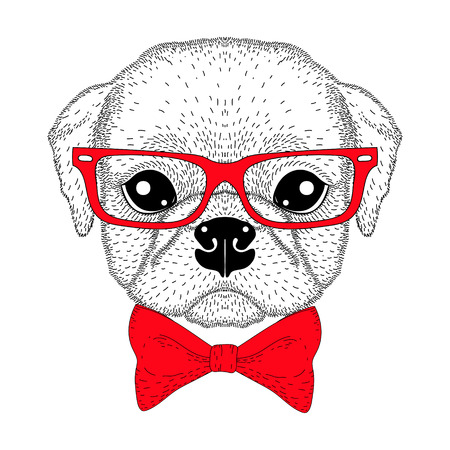 Cute pug boy portrait with bow tie, hipster glasses. Hand drawn dog face, anthropomorphic fashion animal cartoon illustration for t-shirt print, kids greeting card, intitation for pets party. Illustration