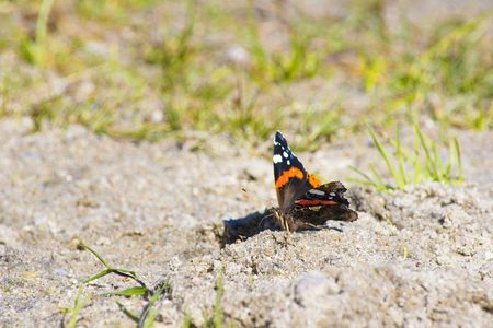 beach butterfly: butterfly on the beach Stock Photo