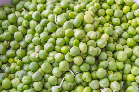 shelled: Shelled Green Peas Close up Stock Photo