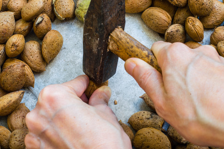 Womans Hand  Holding a Hammer for Cracking Almond Shells