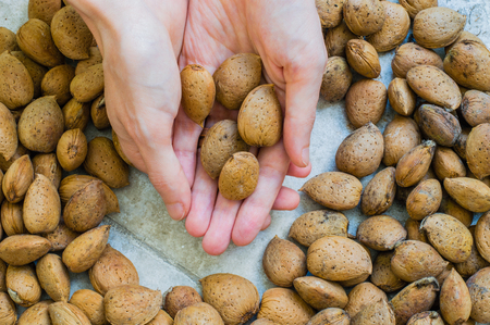 woman's hand: Womans Hand Holding Almonds