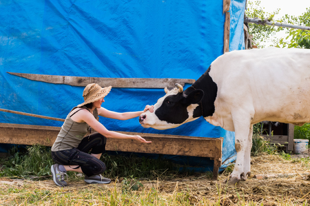 Dairy black and white spotted cow in the village. Young woman caressing cow nose. Stock Photo