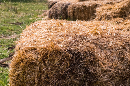 Closeup of hay bales in a village. Dry hay stacks in a rural scene.