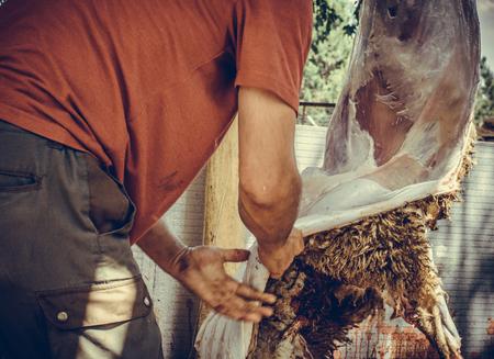 Muslim butcher man cutting a sheep for Eid Al-Adha. Eid al-Adha (Sacrifice Feast) is the second of two Muslim holidays celebrated worldwide each year. Stock Photo