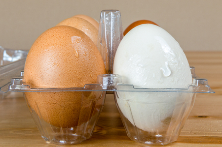 Close up of wet clean chicken eggs in a plastic box on a table. 版權商用圖片