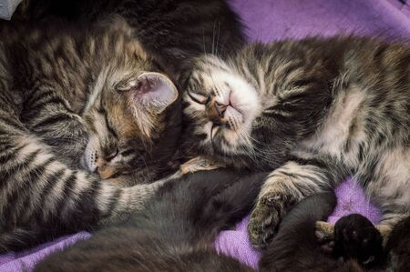 Group of little tabby cats sleeping together at home. Stock Photo
