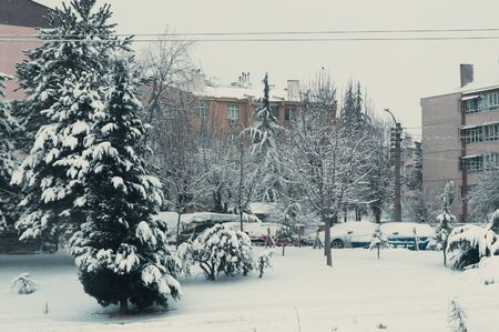Snow-covered trees, garden and cars. View from the window.