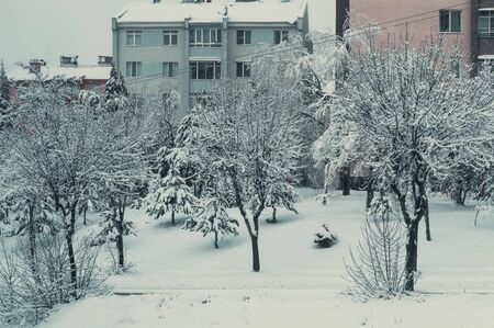 Snow-covered trees, garden and cars. View from the window. Stok Fotoğraf - 150164158
