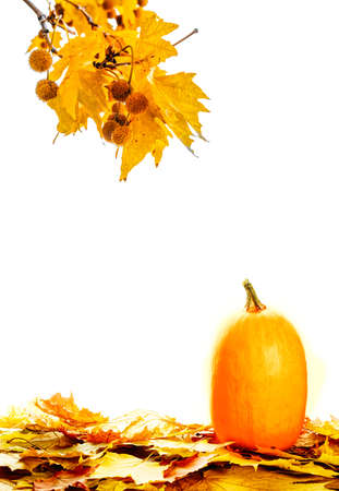 Fresh autumn pumpkin with fall leaves isolated on white background. Thanksgiving copcept. Stok Fotoğraf