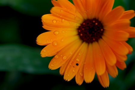 naturaleza: Flower - Flor - Blume Stock Photo