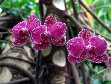 Purple tropical flowers Stock Photo - 2706315