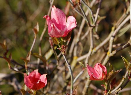 Three pink flowers Stock Photo - 3053515
