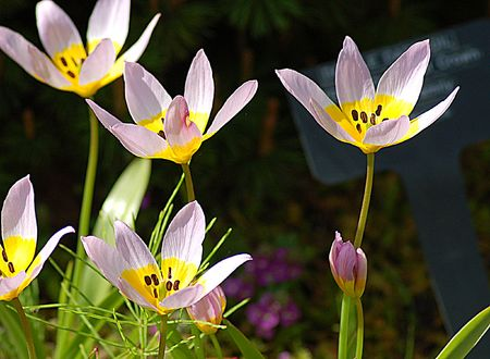 Five purple flowers Stock Photo - 3061118