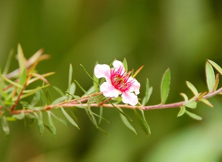 Little pink flower against green background Stock Photo - 3061135