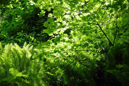 Ferns in forest Stock Photo - 3172208