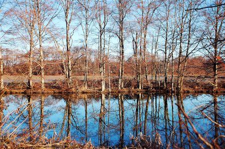 Woodland marsh Stock Photo - 4332110