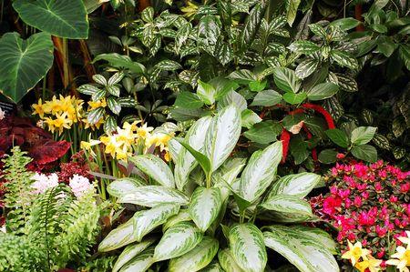 Green tropical garden Stock Photo - 4358740