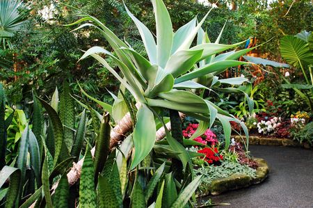 Lush tropical garden Stock Photo - 4358739