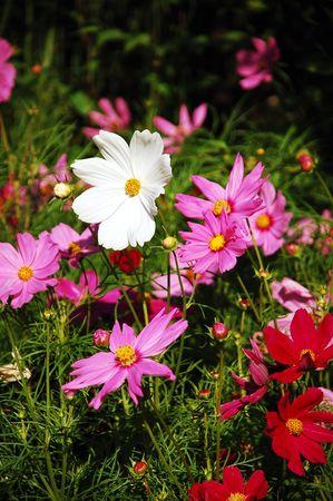 Colorful wildflowers 写真素材