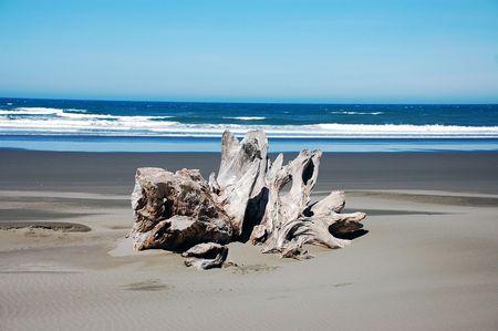 Driftwood on beach photo