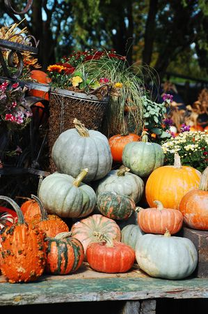 Decorative pumpkins and gourds on display photo