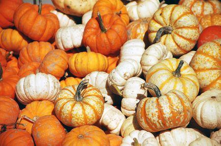 Assortment of mini pumpkins photo