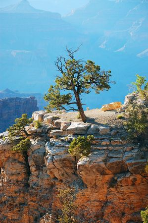 Single tree in Grand Canyon photo