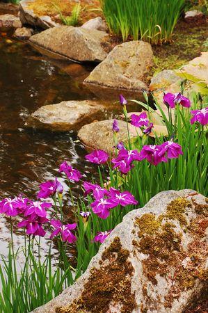 Iris flowers growing next to stream