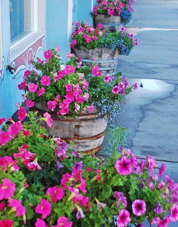 planters: Petunia flower planters Stock Photo