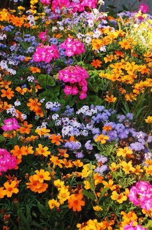 Kleurrijke bloemen tuin in de late zomer