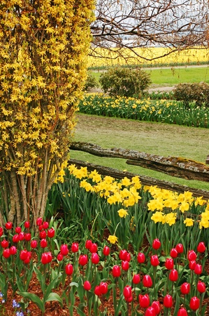 Tulips and daffodils spring garden Stock Photo - 9296042
