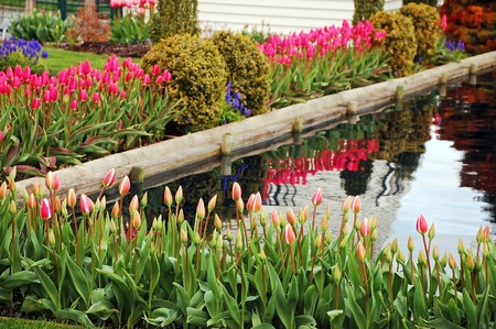 Spingtime garden with colorful tulips Stock Photo