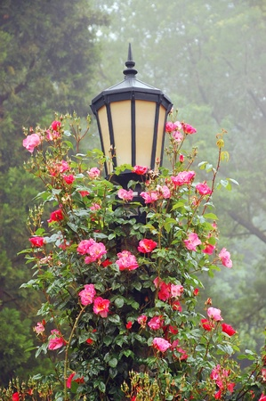 post: Black lamppost with climbing roses Stock Photo