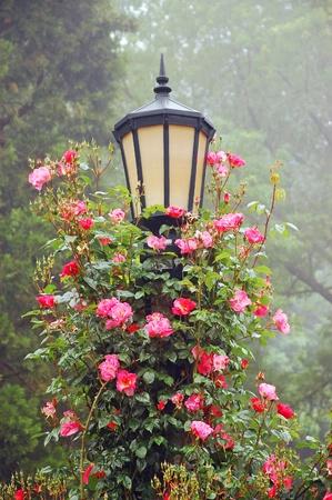 Zwarte lantaarnpaal met klimrozen