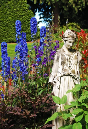 Delphinium garden photo