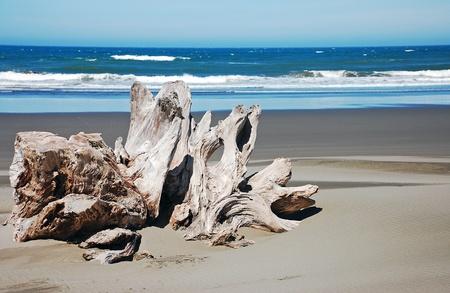 Driftwood on Oregon beach photo