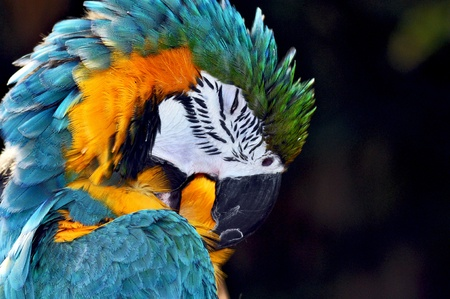 Colorful parrot head photo