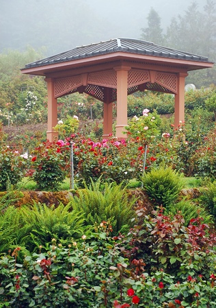 Ornamental wooden gazebo in rose garden with mist in background Stock Photo - 12899974
