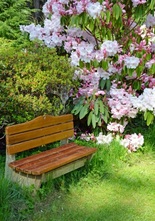 Wooden bench in colorful rhododendron garden 免版税图像
