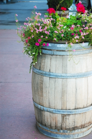 petunias: Old wooden barrel full of colorful flowers Stock Photo