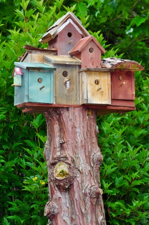 Several birdhouses on top of tree stump