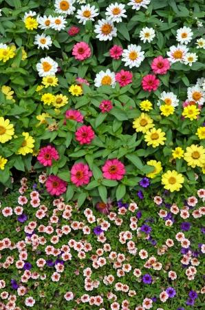 petunias: Colorful assortment of summer garden flowers